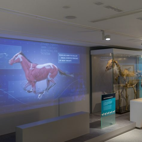 Maktoum Gallery of the Thoroughbred.   Image courtesy of the National Heritage Centre for Horseracing and Sporting Art